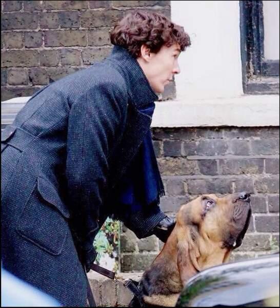 Sherlock aurait-il enfin trouvé un ami aussi fidèle que John Watson ?
