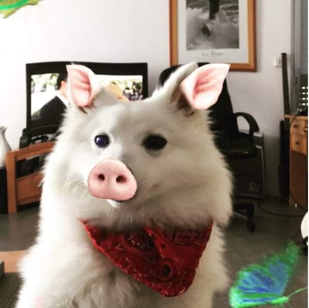 La voilà en version petit cochon