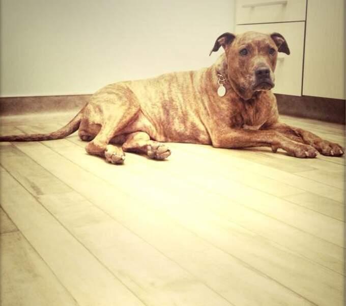 Voici Tina, le chien de Jessica Biel. Il n'y a qu'elle sur son compte Instagram !