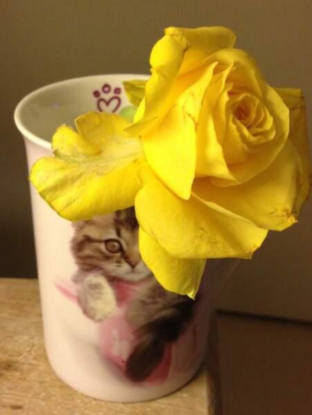 Et voilà où est passée la rose de Philippe... dans un mug affreux !