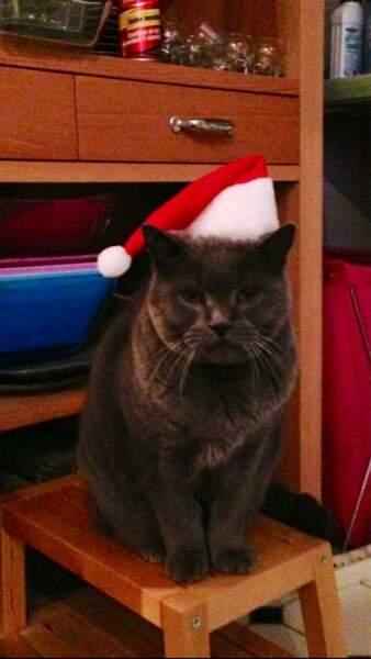 Il a pas l'air très heureux, comme ça, le chat de Christophe Beaugrand...