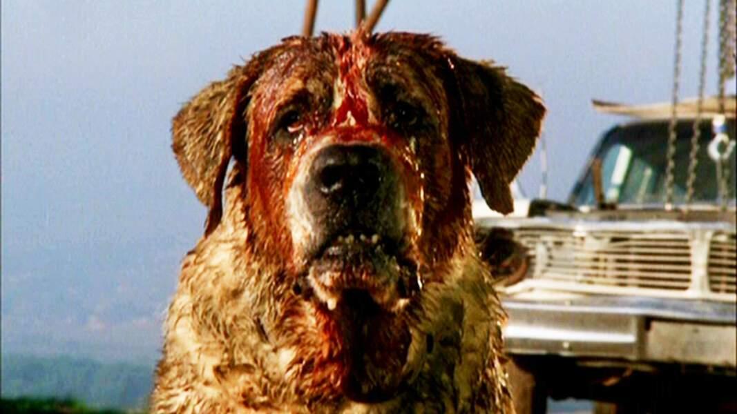 CUJO (1983) : Lui par contre, il est moins sympa. Il veut croquer un petit garçon ! Drôle de Saint-Bernard !