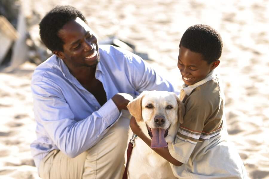 Vincent, le seul chien de la série Lost
