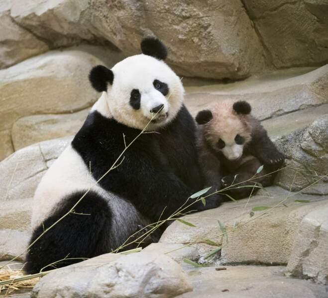 """Sa maman s'appelle Huan Huan, ce qui signifie """"bienvenue"""" et """"grande joie"""""""