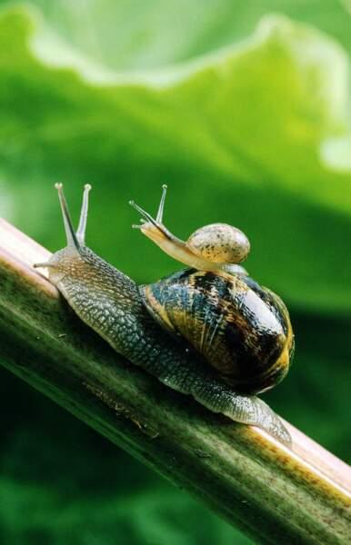 Dans la famille escargot, on n'est pas pressés du tout. Mais l'important, c'est d'être en famille !