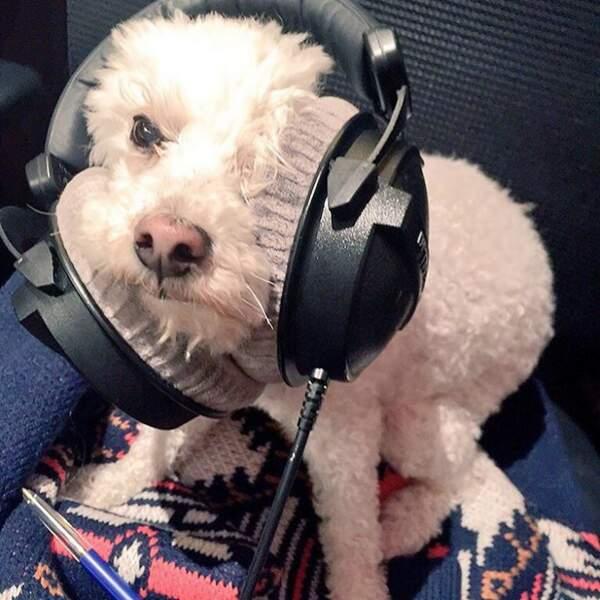 Elodie Gossuin ne se sépare jamais de son petit chien, même pour aller à la radio RFM.