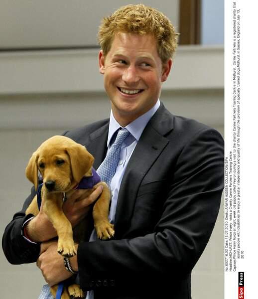 Le Prince Harry en visite  dans un centre associatif  caritatif canin .
