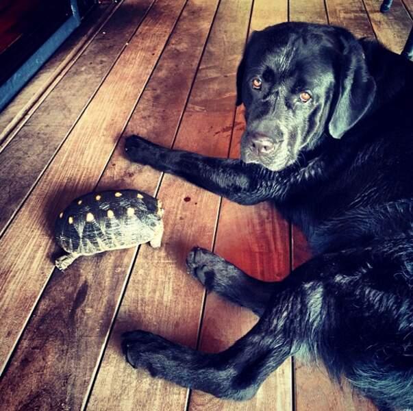 Voici Santos, le chien des Hallyday !