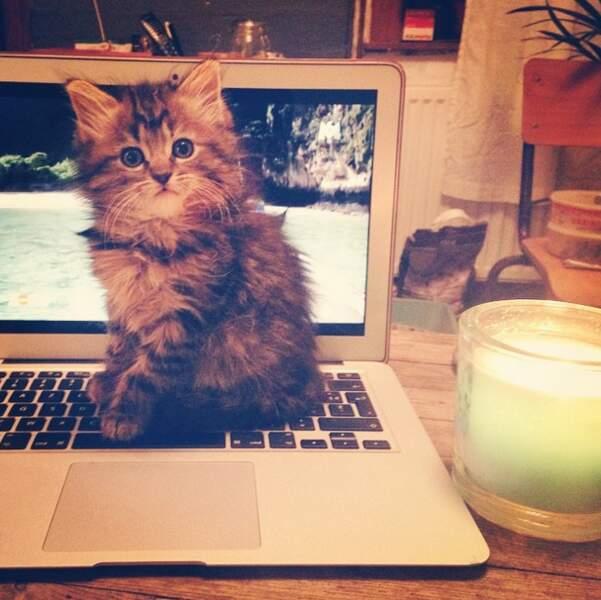 Mais aussi des photos de son chat !