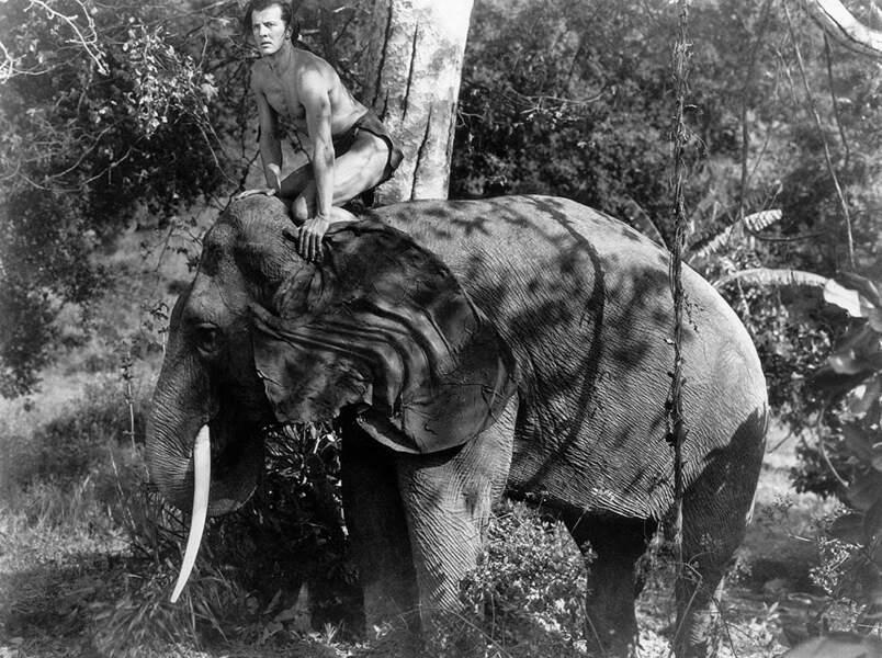 Sur mon éléphant, je vois tout !