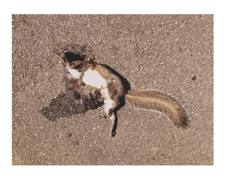 Quand les zombies lui manquent, Steven Yeun se rabat sur les écureuils écrasés...