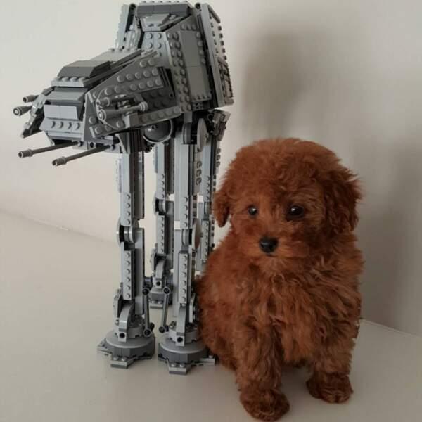 On vous présente Rey, le chien du petit Jacob Tremblay (Room), nommée après l'héroïne de Star Wars.