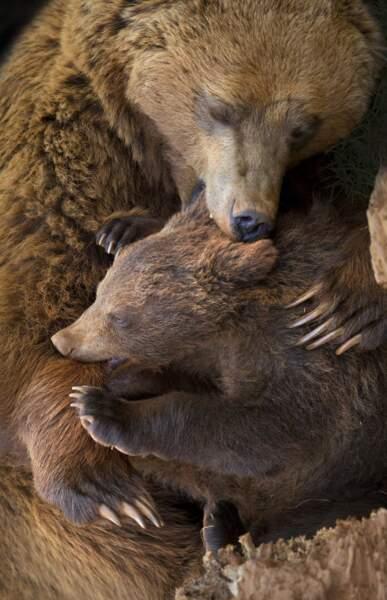 Regardez les griffes de cet ourson. Ce n'est définitivement pas une peluche !