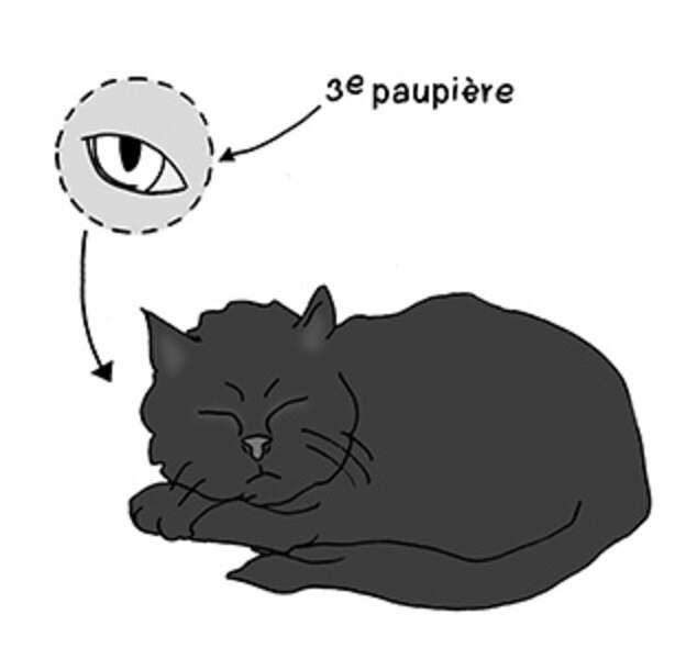 Pourquoi les chats peuvent-ils dormir en plein soleil ?