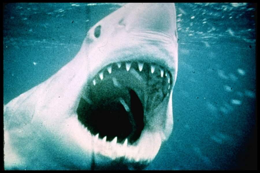 """N°2 : """"Les dents de la mer"""" (161 calories), le film à cause duquel on n'ose plus nager là où l'on n'a pas pied !"""