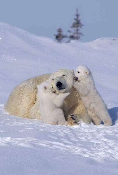 Toujours protectrices avec leurs petits, elles leur apprennent à grandir dans un monde cruel. Petit diaporama...