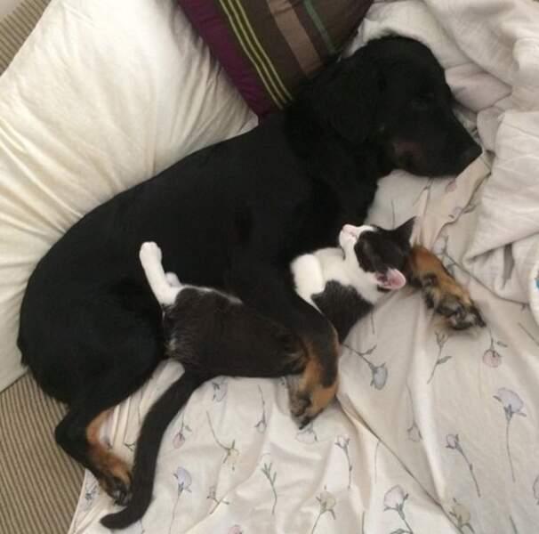 Chez Ellen de Generes, chien et chat sont amis pour la vie.