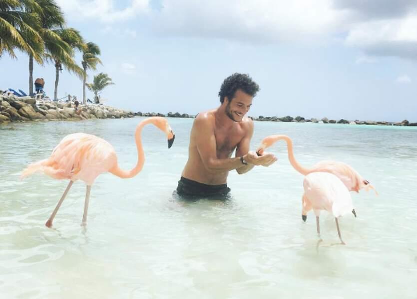 ... puis la petite île d'Aruba, où il a même fait craquer les flamants roses. Quel talent !