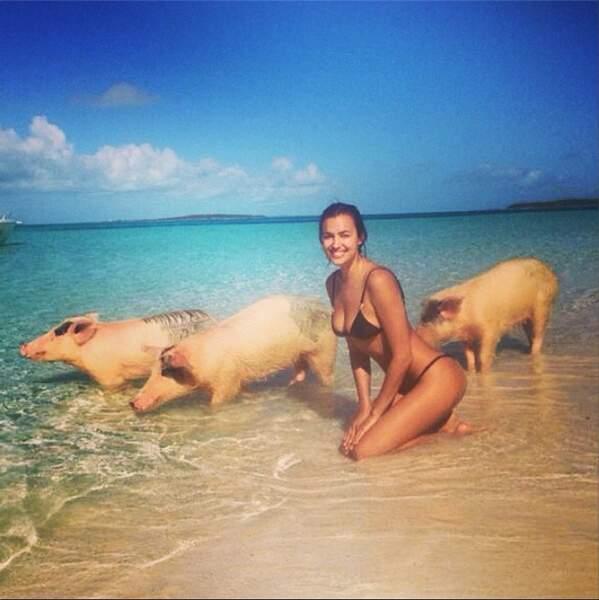 On aimerait bien être l'un des cochons...