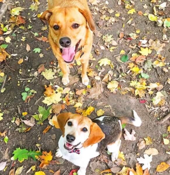 Mais dans la vraie vie, ce sont de ses chiens qu'elle est amoureuse (et un peu du Prince Harry hein)