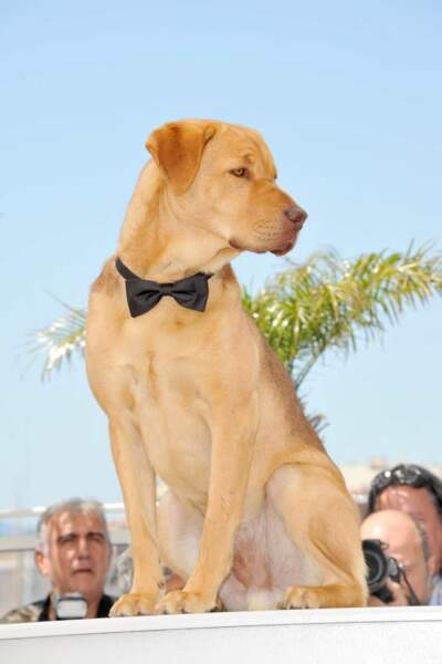 Une des stars du film White God ? Ce chien, qui pose fièrement devant les photographes.