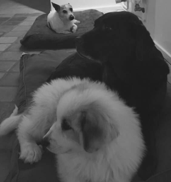 Voici les adorables chiens d'Alessandra Sublet !!!