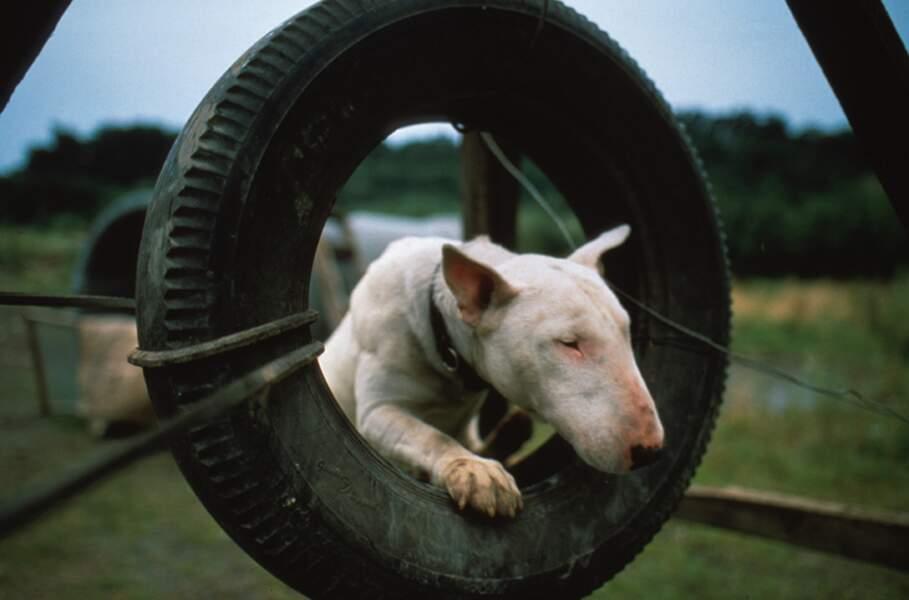 BAXTER (1989) : Le monde des hommes vu à travers le regard d'un chien qui a la haine (et on le comprend)