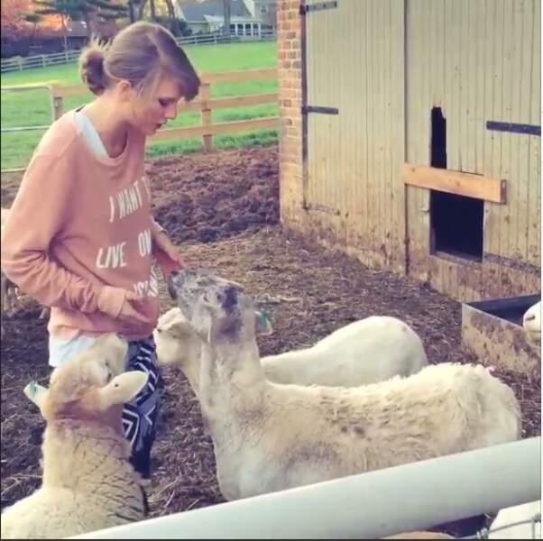 Trop mignon, Taylor Swift en compagnie de chèvres !