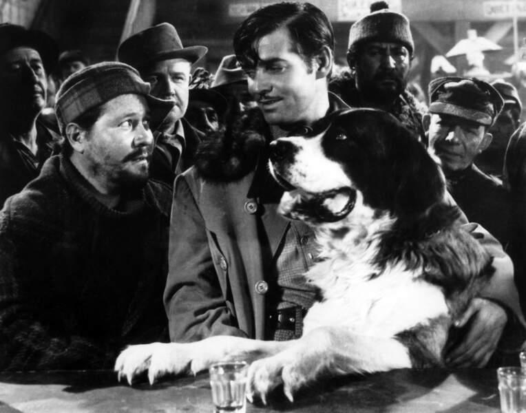 L'APPEL DE LA FORET (1935) : Deuxième adaptation du roman de Jack London, avec Clark Gable