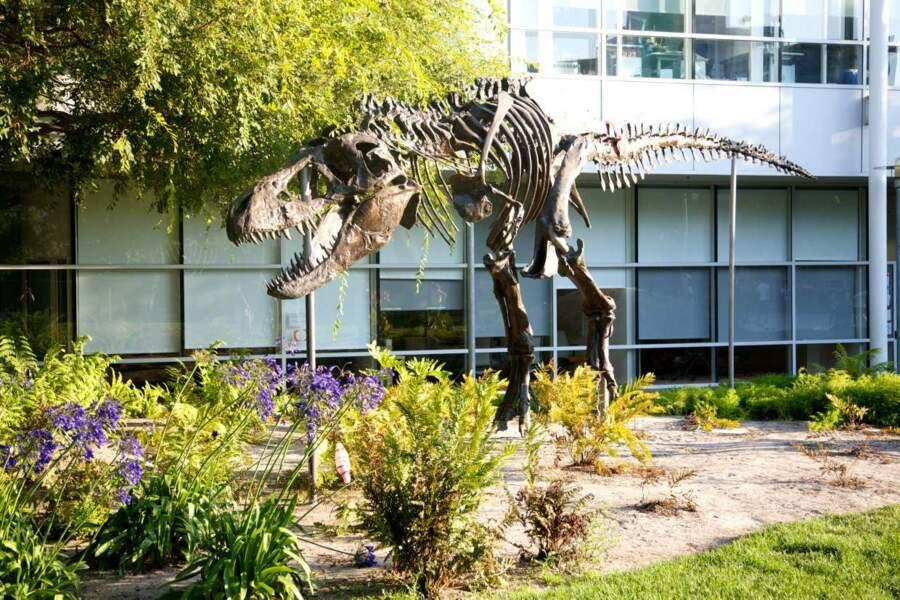 On peut prendre un bain de soleil à côté d'un squelette de dinosaure géant