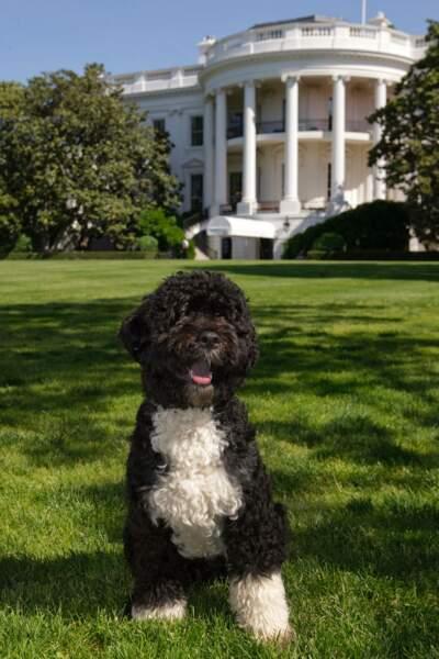 """""""Salut, moi c'est Bo et j'habite une grande niche à Washington"""""""