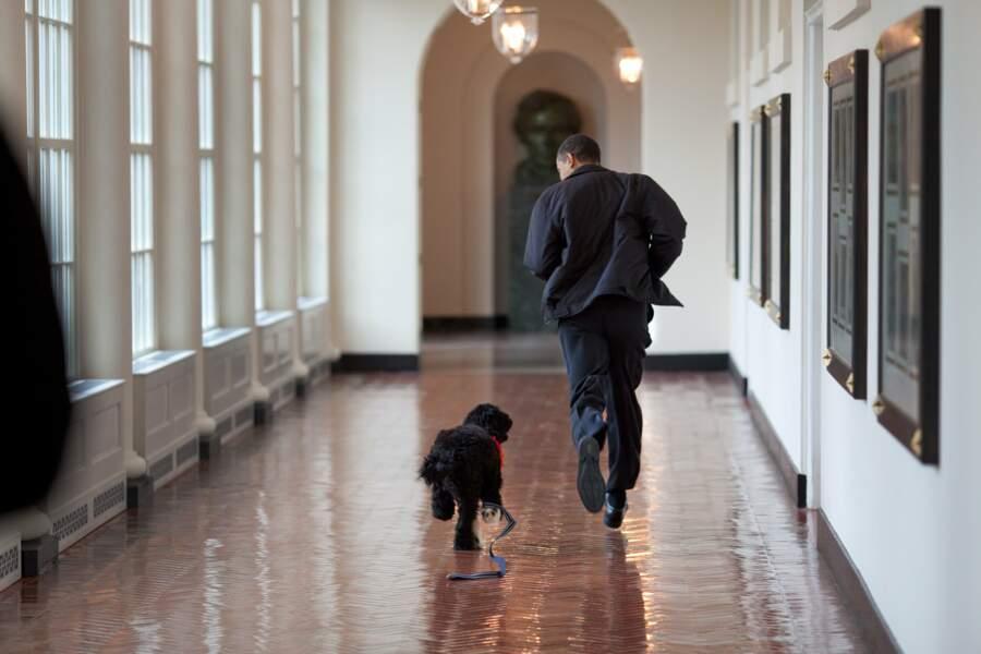 Barack Obama, un président cool qui fait la course à la Maison Blanche avec Bo, le chien de la famille