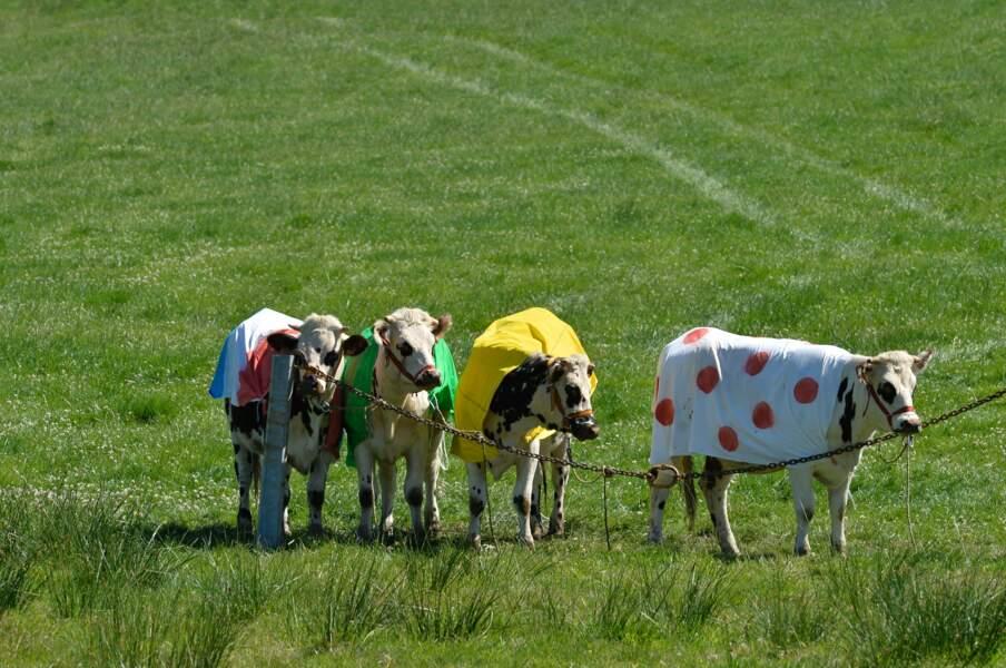Les vaches made in Normandie sont aux couleurs du Tour