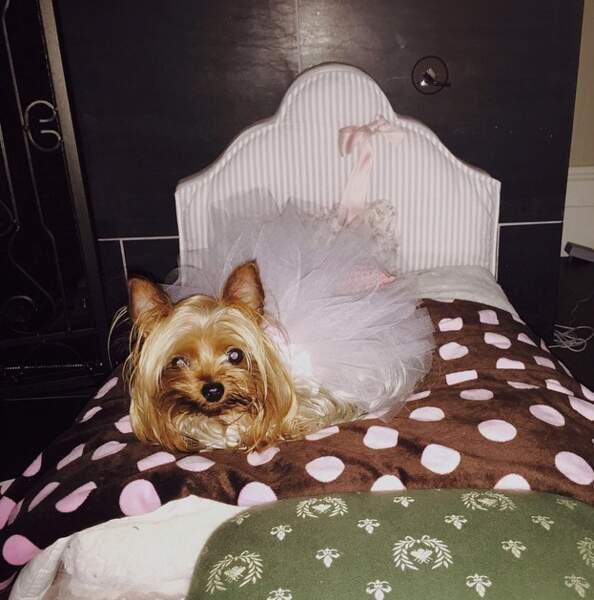 Britney Spears nous présente sa chienne, Princess Sarah Beth (rien que ça).
