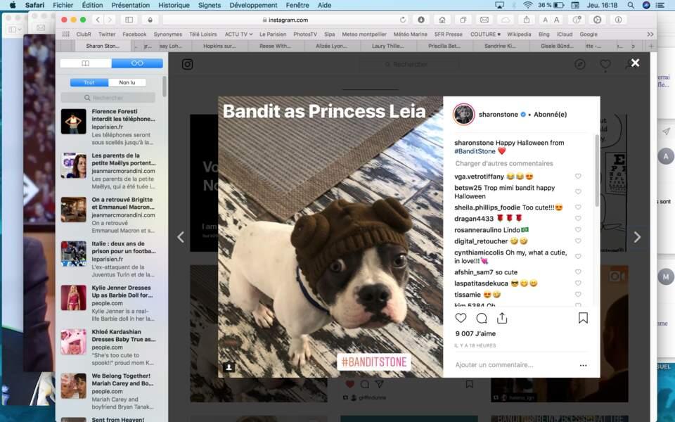 Sharon Stone a affublé son chien Bandit d'une coiffe de Princesse Leia…