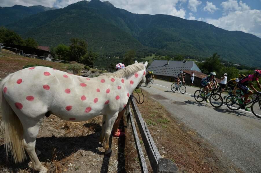 En fait, le maillot à pois a été remporté par un cheval