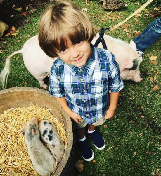 Mais les animaux sur le tournage de Modern Family sont clairement plus choupinets. Gruik.