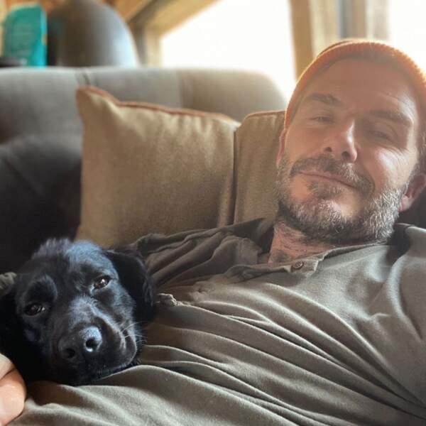 Et après-midi canapé pour David Beckham et son chien Olive.