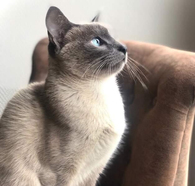 Voici le chat de Miss France 2021