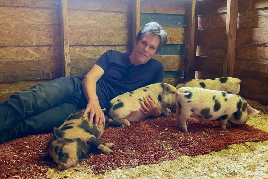 Et notre rêve enfin exaucé : Kevin Bacon et d'adorables cochons miniatures.
